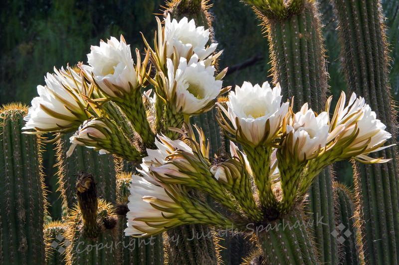 Flowers Galore - Judith Sparhawk