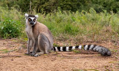 Madagascar!