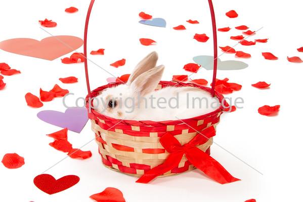 TO ORDER PRINTS: PHS Valentine's Day Shoot