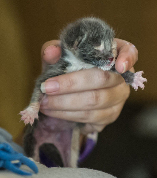 2012-09-12 Kittens-22 Web.jpg