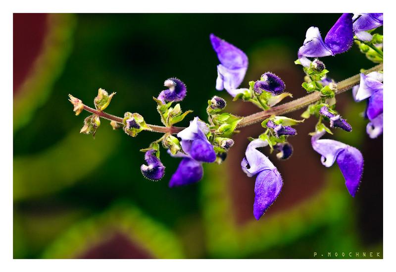 plantstem-copy.jpg