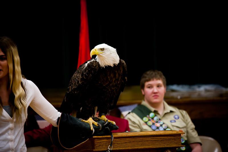 martin eagle-20.jpg