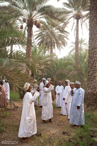 Palm Tree Auction 9- Mudhaibi.jpg