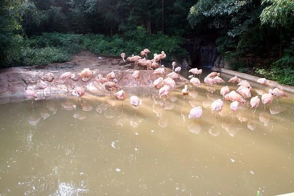Zoo_Atlanta_08/15/05