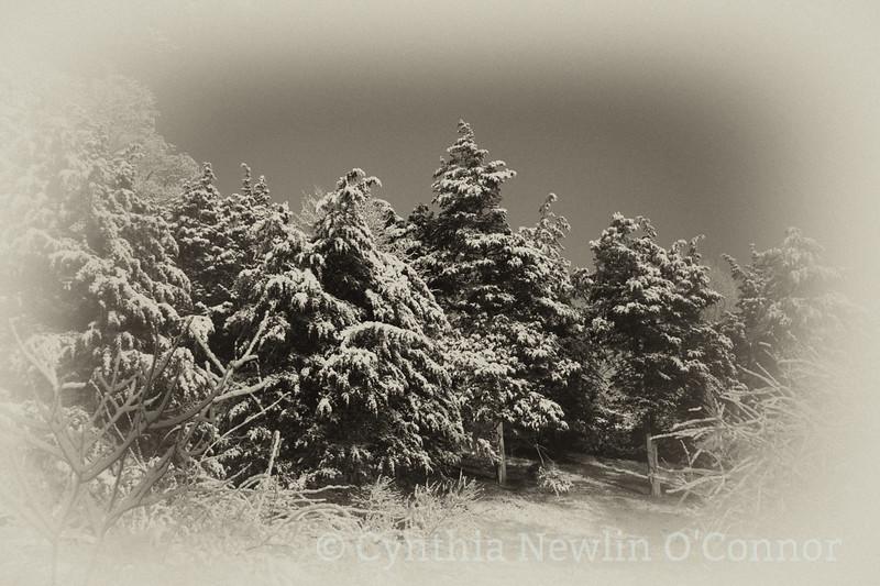 winter 09 (1 of 1).jpg