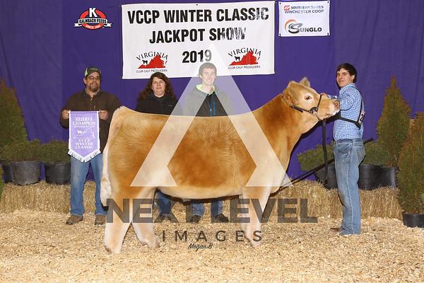 2019 Steer Backdrop