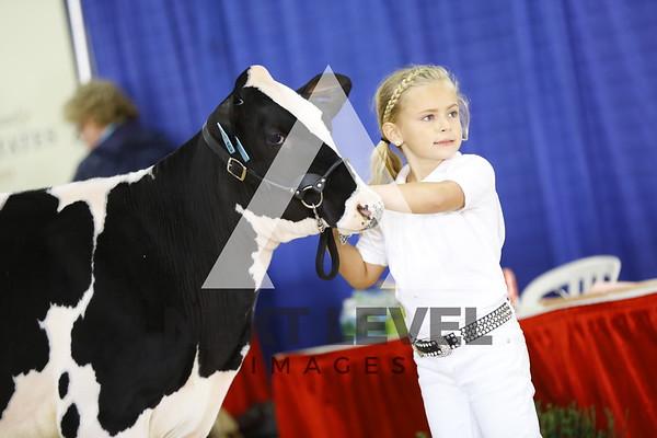 2016 Holstein Heifers
