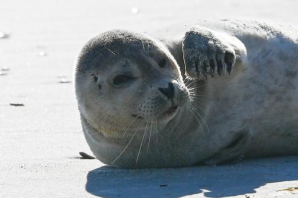 2021 Bonzer Beach House - Seals