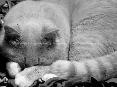 023-cat_tj-warren_co-27dec08-1314