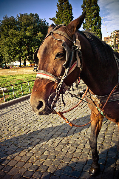 Horse at The Colosseum