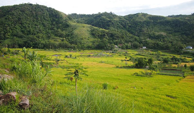 P5208637-rice-paddies.JPG