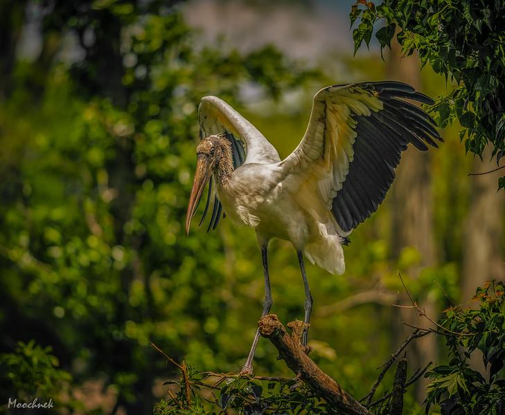 Stork in Golden Light