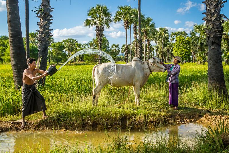 14-11-10_Myanmar__MG_1555.jpg