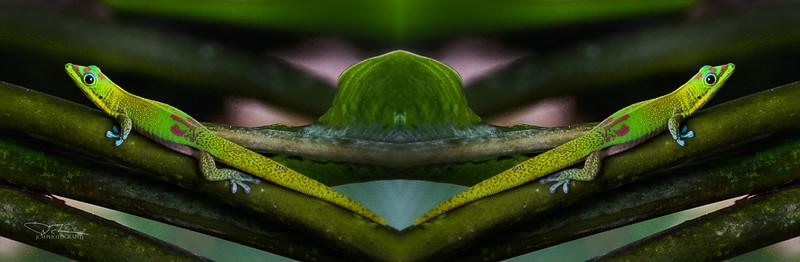 Gecko Diptych.jpg