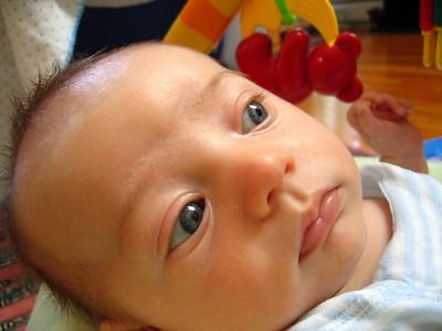 2005 06 Roman