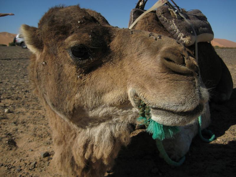 Day4-Sahara-56.jpg