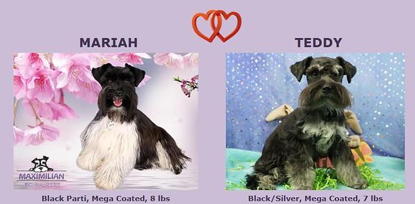 Mariah & Teddy Puppies, DOB 3/06/2021