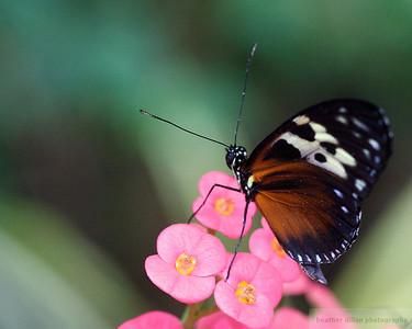 2008-07 Butterfly