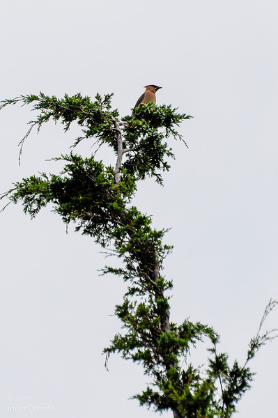 El Dorado Nature Preserve