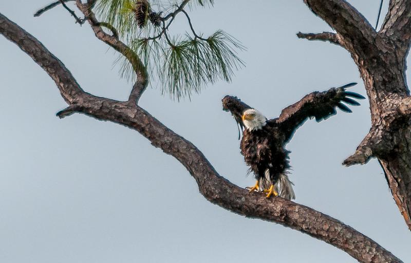 Eagles 4-4-079.jpg