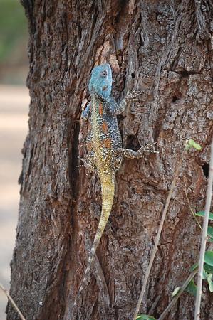 Kruger Reptiles