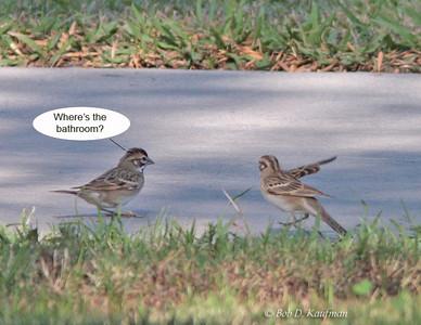 Ornithocomics