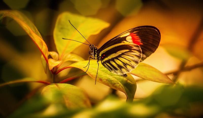 Butterfly-208.jpg