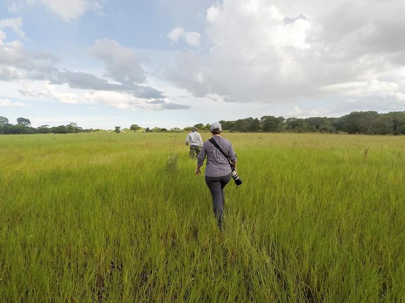 Trip to Brazil itinerary - Pantanal