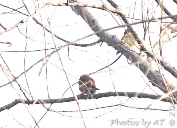 2006-12-18/19 Busch Wildlife Conservation Area