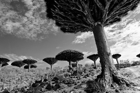 Socotra: Black and white