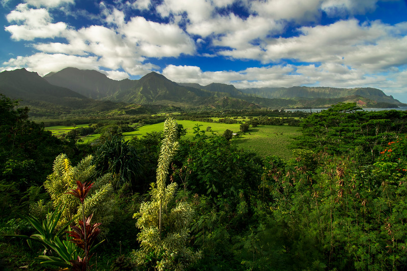 Tropical scenery, Princeville, Kauai, Hawaii