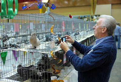 2011 Pageant of Pigeons