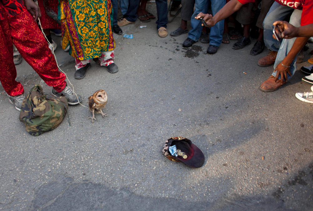 . In this Jan. 27, 2013 photo, snake handler Saintilus Resilus\' cap lays on the ground for collecting money as he shows off an owl he caught in the wild days before, as his sack of snakes lays at his feet during pre-Lenten Carnival season in Petionville, Haiti. This year, Resilus has new catches to display: an owl that he promises to let go after Carnival. (AP Photo/Dieu Nalio Chery)