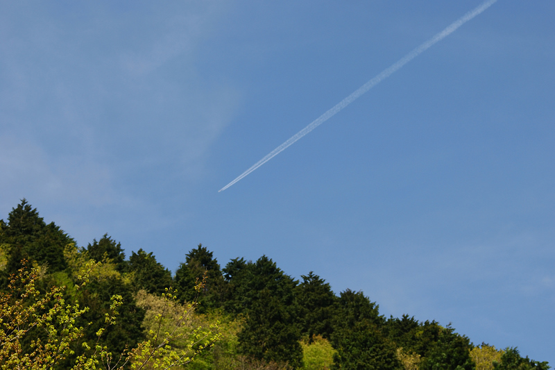jet trail and trees copy.jpg