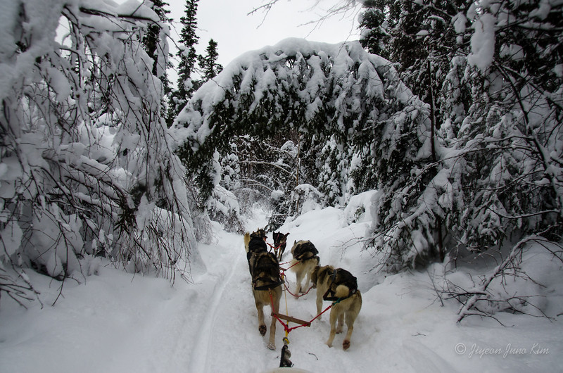 USA-Alaska-Anchorage-Dog-Mushing-3.jpg