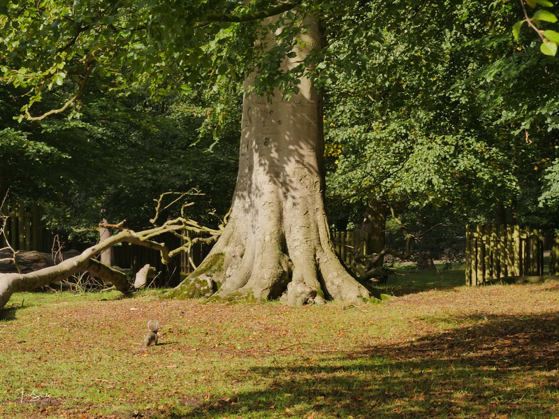 Dunham Massey September 18-33.jpg