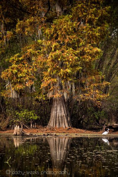 Atchafalaya Basin + Swamp