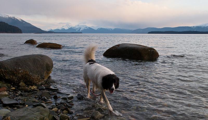 Junie loves the water.