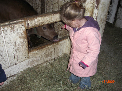 Playing with Nancys Cows