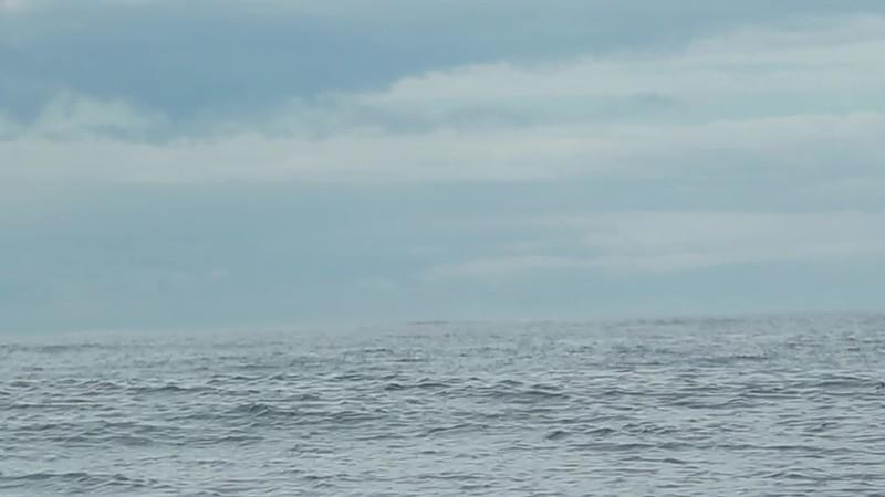 Fluke | Whale Skipper #OrcaPiet