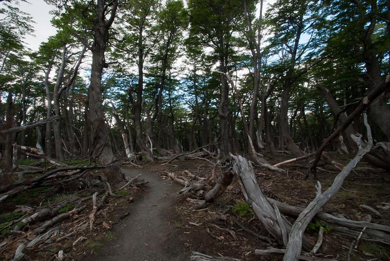 El Chalten 201112 Pliegue Tumbado Hike (67).jpg