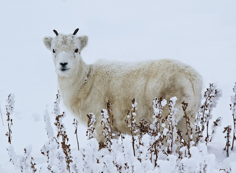 Arctic Wildlife and Landscapes Photo Workshop-6.jpg