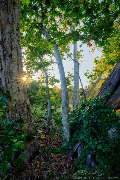 RSM-Tree-Forest.jpg