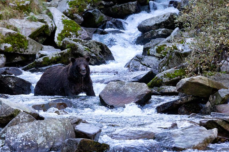 20140906-_Q2C5598Katmai-Bears-Kuliak-Edit-Edit.jpg