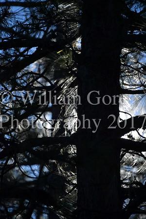 Wild West Friday ~ Bill Gore
