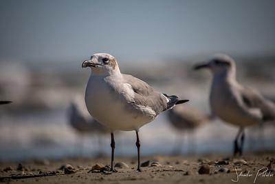 Galveston wildlife