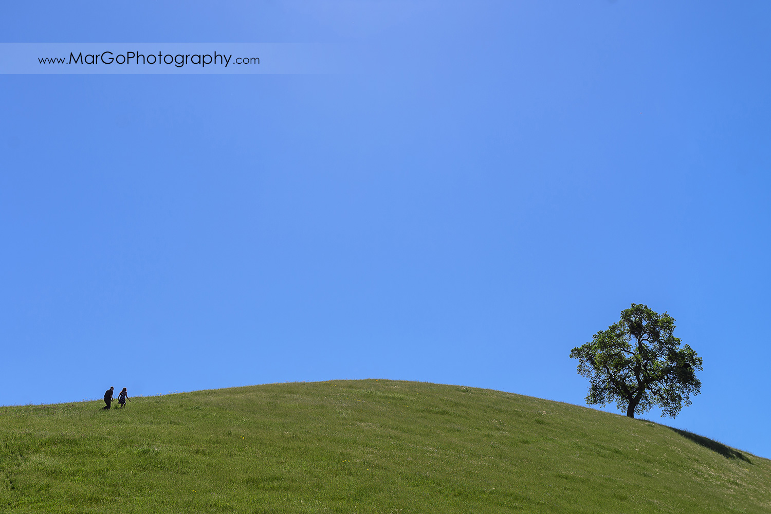 silhouette of couple walking up the hill with lonely oak tree during engagement session at Sunol Regional Wilderness