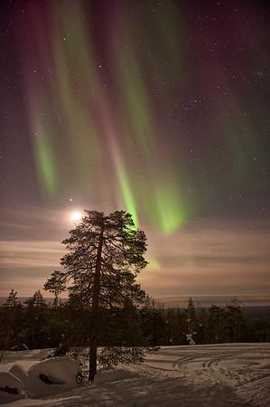 Auroras and Moonlight