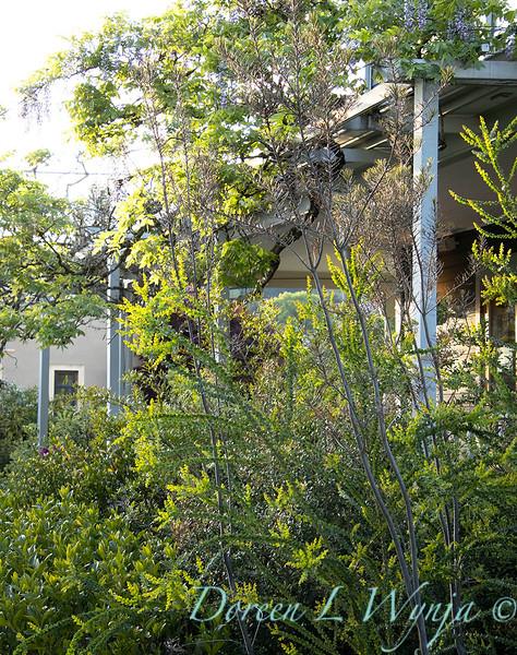 Garden at Argyle winery_1070.jpg