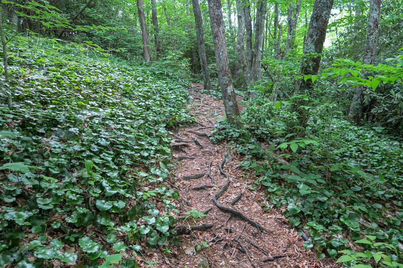 Mountains-to-Sea Trail -- 4,490'